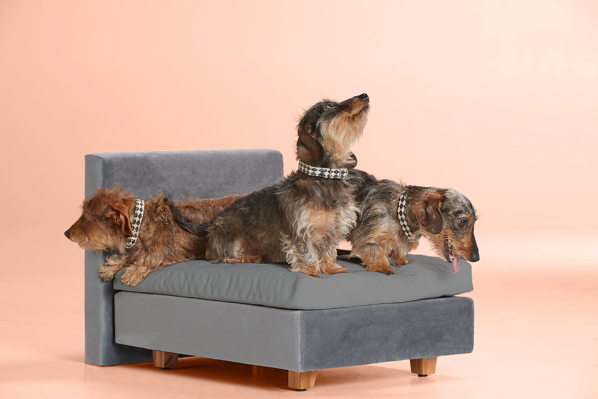 Hondenboxspring Buddy   Swiss Sense