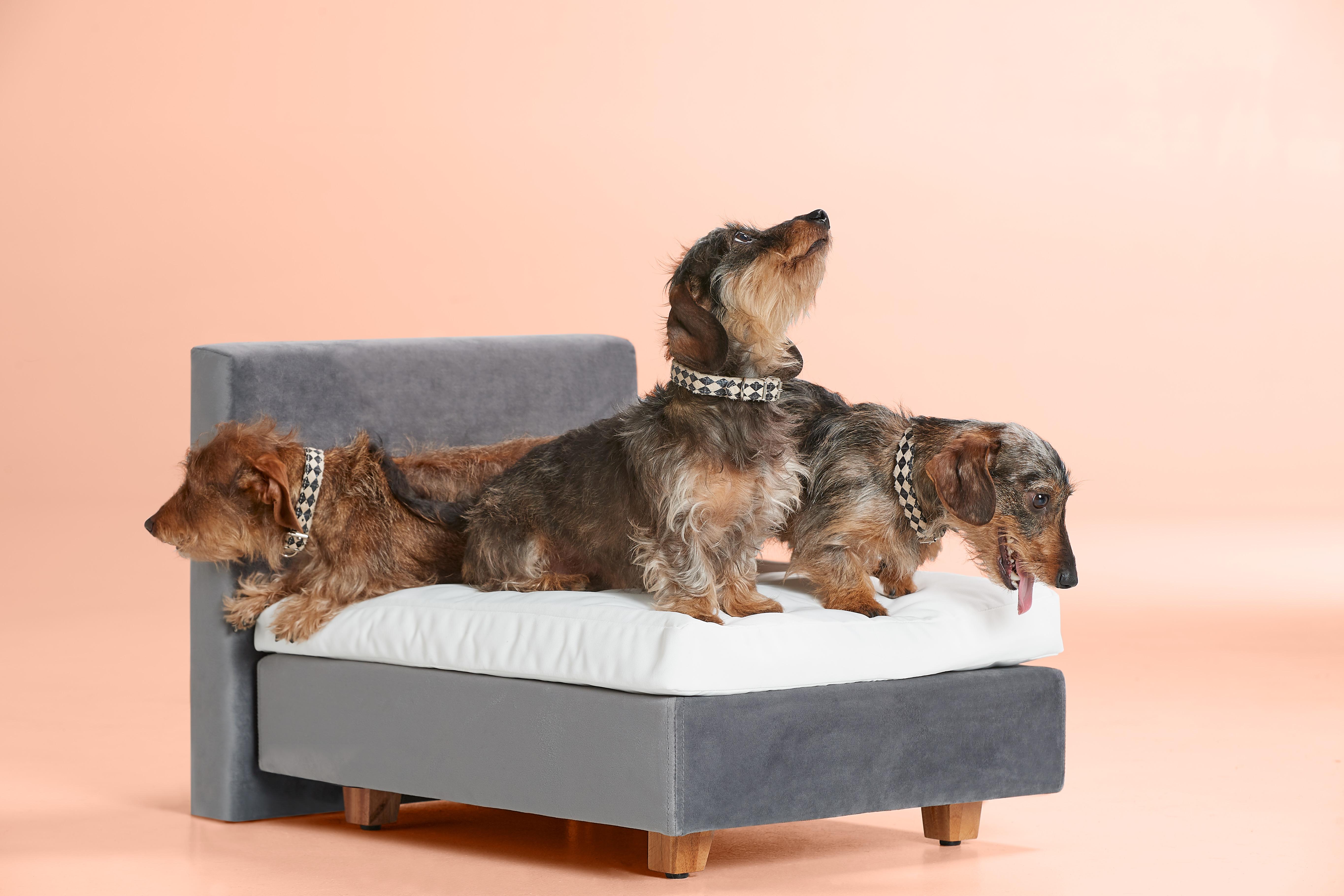 Hondenboxspring Buddy | Swiss Sense